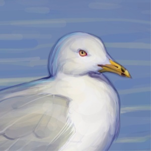 sterne_caspienne, Illustration  pour le Centre d'interprétation du marais  de Magog ( LAMRAC)