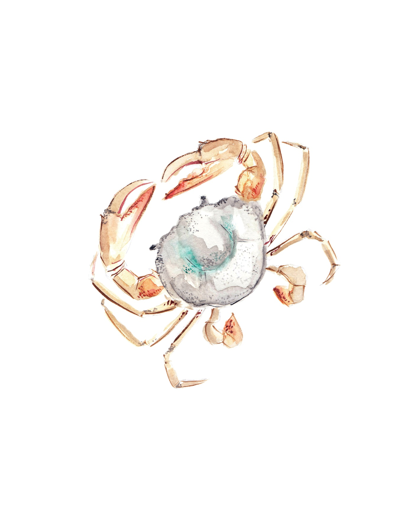 Carolie Joly Illustrations - Le crabe