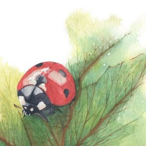 coccinelle_by_Eve-Chabot